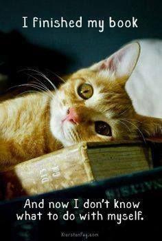 book-done-meme-cat